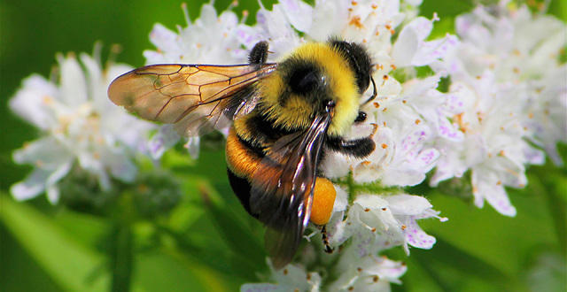 Five Family Friendly Ways to Protect Pollinators